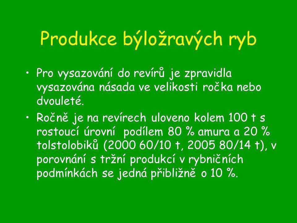 Produkce býložravých ryb Pro vysazování do revírů je zpravidla vysazována násada ve velikosti ročka nebo dvouleté.