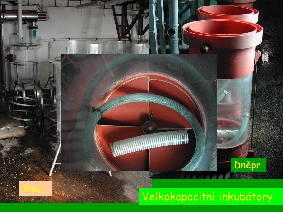 Velkokapacitní inkubátory Amur Dněpr