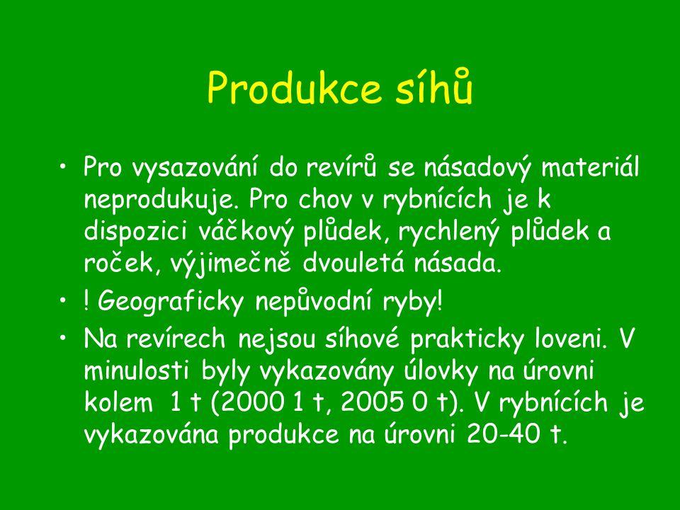 Produkce síhů Pro vysazování do revírů se násadový materiál neprodukuje.