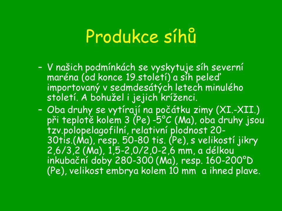 Produkce síhů –V našich podmínkách se vyskytuje síh severní maréna (od konce 19.století) a síh peleď importovaný v sedmdesátých letech minulého století.