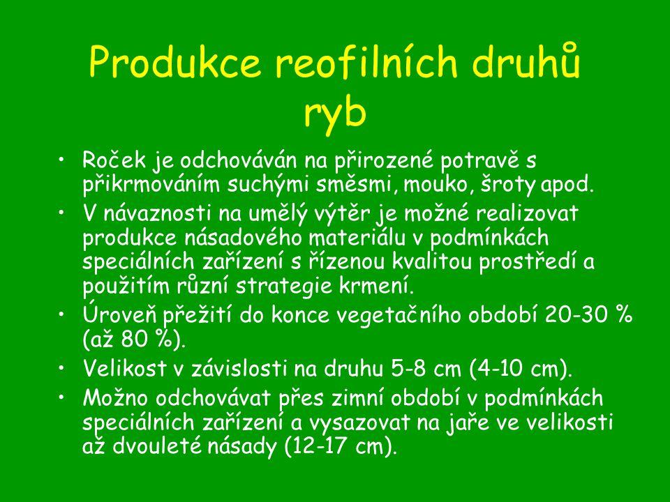 Produkce reofilních druhů ryb Roček je odchováván na přirozené potravě s přikrmováním suchými směsmi, mouko, šroty apod.