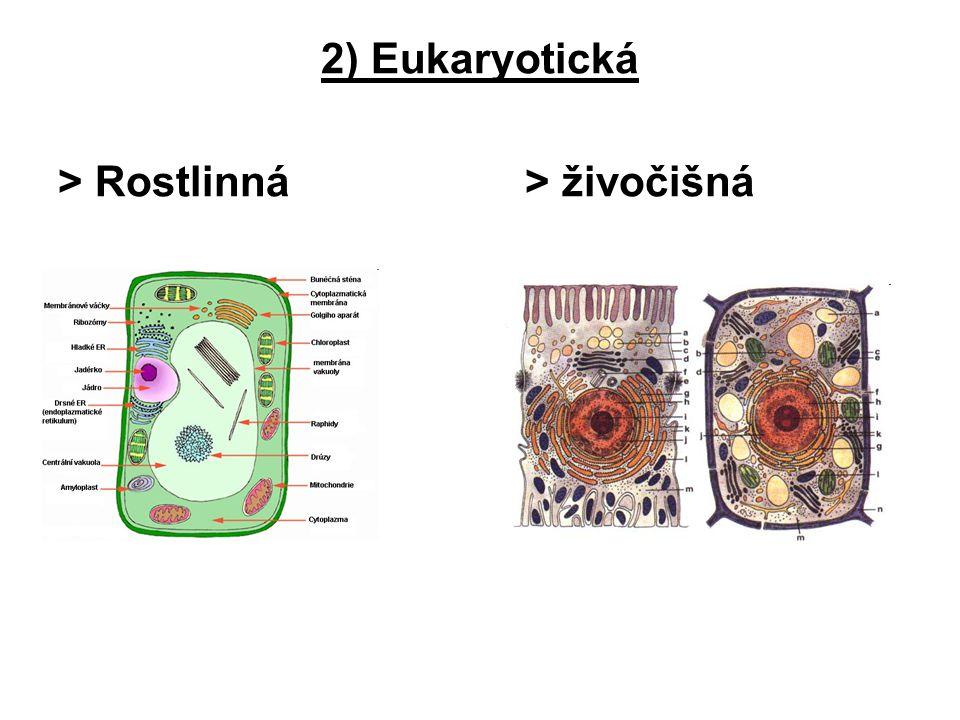 Buněčné struktury  Různé buněčné součásti, které vykonávají specializované funkce 1.Buněčné povrchy 2.Cytoplazma 3.Buněčné organely