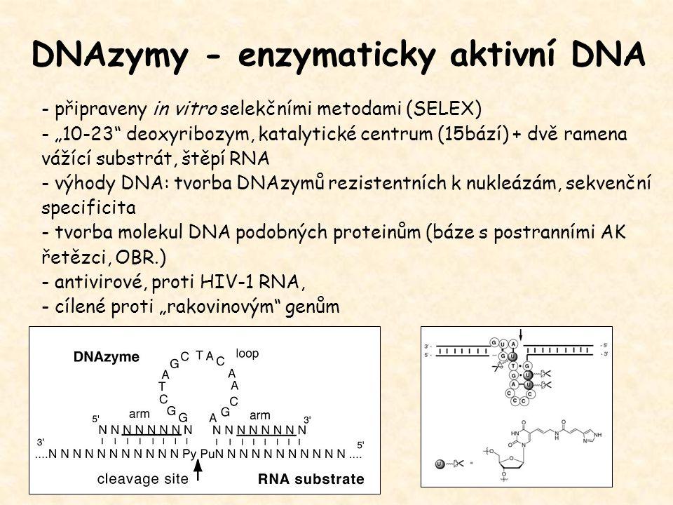 """DNAzymy - enzymaticky aktivní DNA - připraveny in vitro selekčními metodami (SELEX) - """"10-23"""" deoxyribozym, katalytické centrum (15bází) + dvě ramena"""