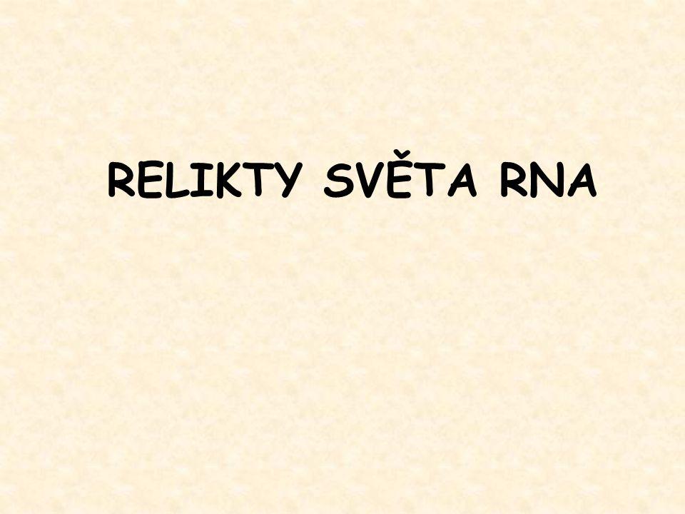 RELIKTY SVĚTA RNA