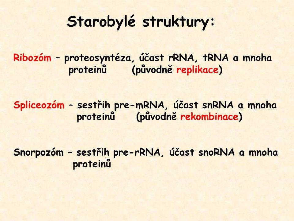 Starobylé struktury: Ribozóm – proteosyntéza, účast rRNA, tRNA a mnoha proteinů (původně replikace) Spliceozóm – sestřih pre-mRNA, účast snRNA a mnoha