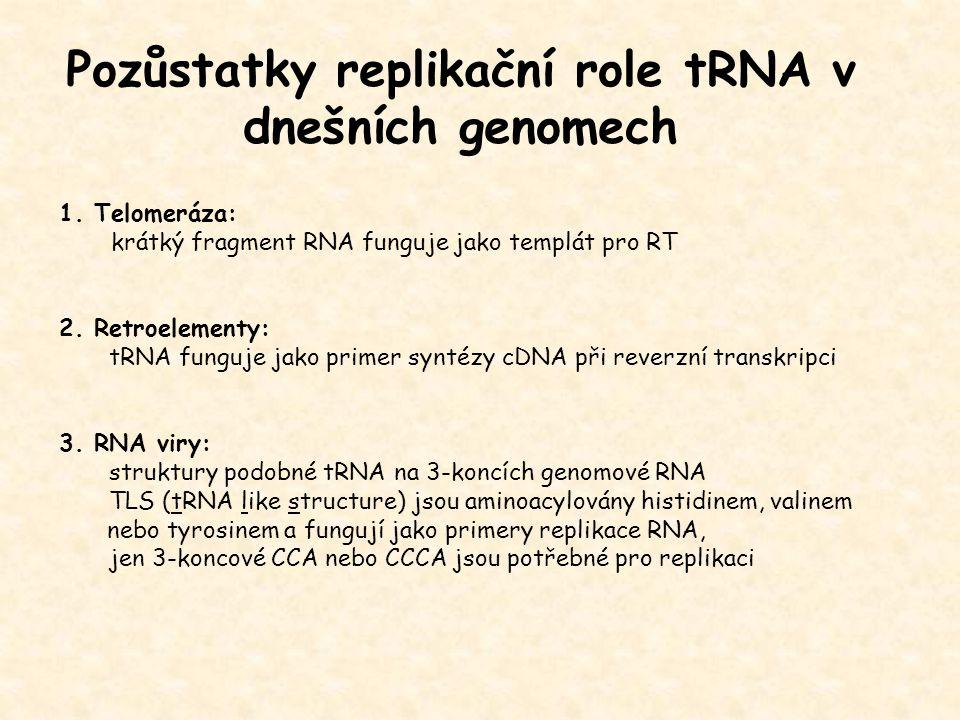 Pozůstatky replikační role tRNA v dnešních genomech 1. Telomeráza: krátký fragment RNA funguje jako templát pro RT 2. Retroelementy: tRNA funguje jako