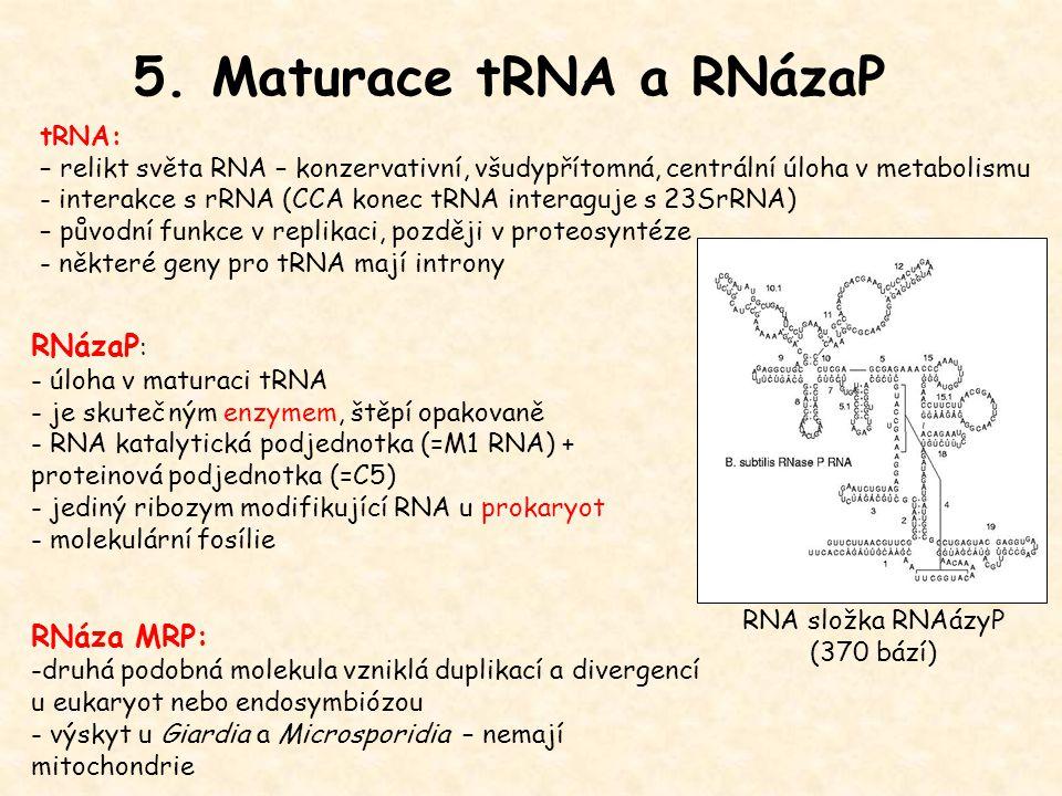 5. Maturace tRNA a RNázaP RNázaP : - úloha v maturaci tRNA - je skutečným enzymem, štěpí opakovaně - RNA katalytická podjednotka (=M1 RNA) + proteinov