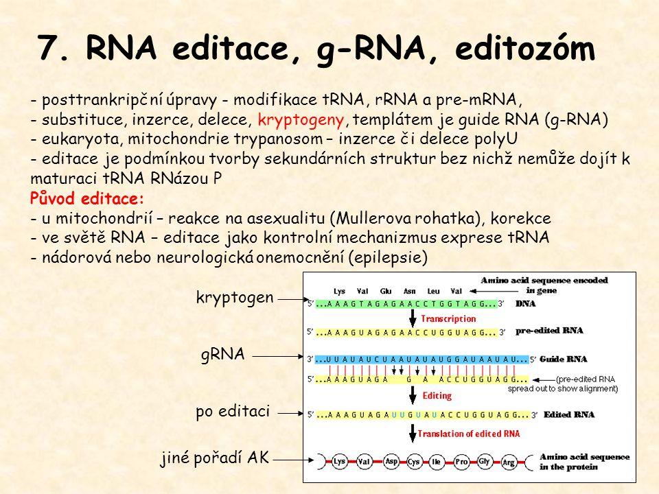 7. RNA editace, g-RNA, editozóm - posttrankripční úpravy - modifikace tRNA, rRNA a pre-mRNA, - substituce, inzerce, delece, kryptogeny, templátem je g