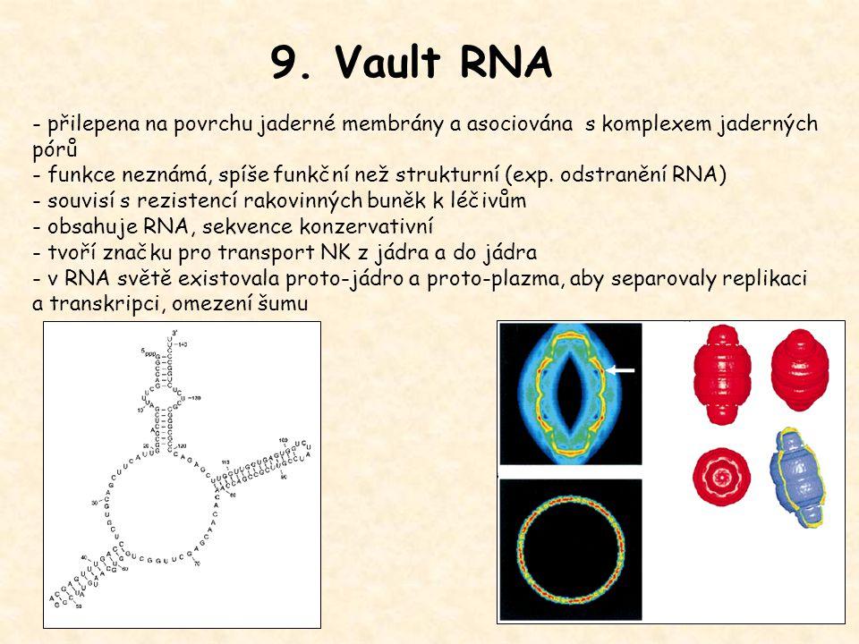 9. Vault RNA - přilepena na povrchu jaderné membrány a asociována s komplexem jaderných pórů - funkce neznámá, spíše funkční než strukturní (exp. odst
