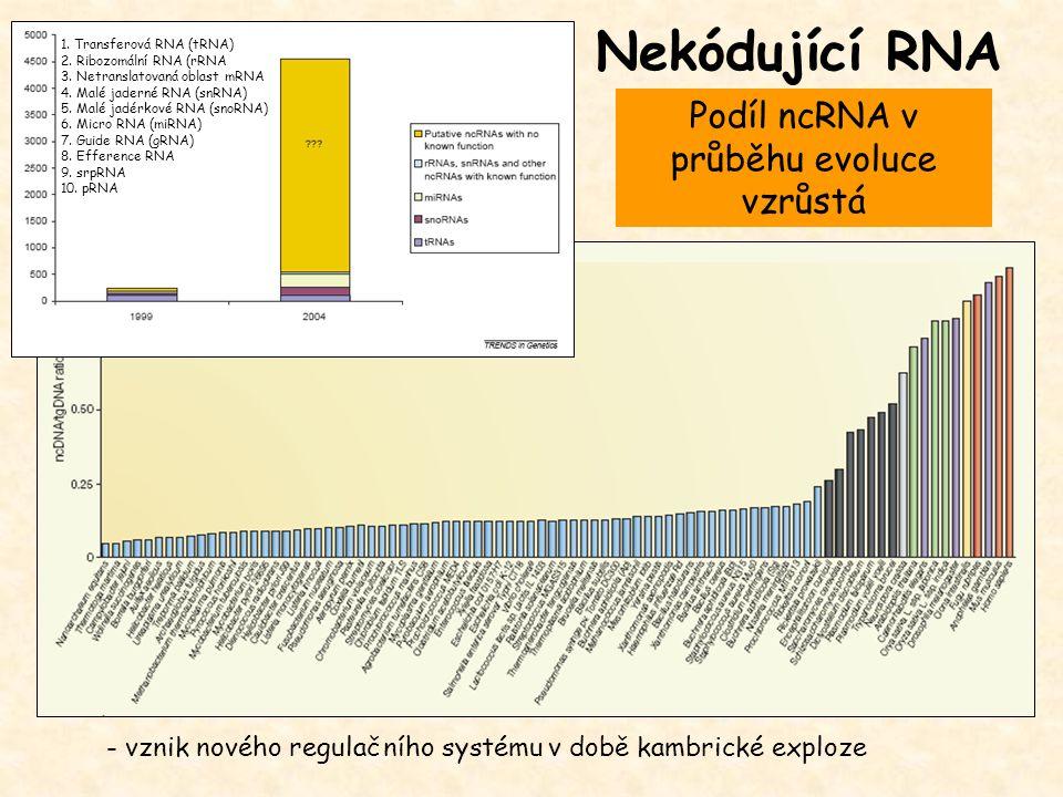Nekódující RNA - vznik nového regulačního systému v době kambrické exploze 1. Transferová RNA (tRNA) 2. Ribozomální RNA (rRNA 3. Netranslatovaná oblas