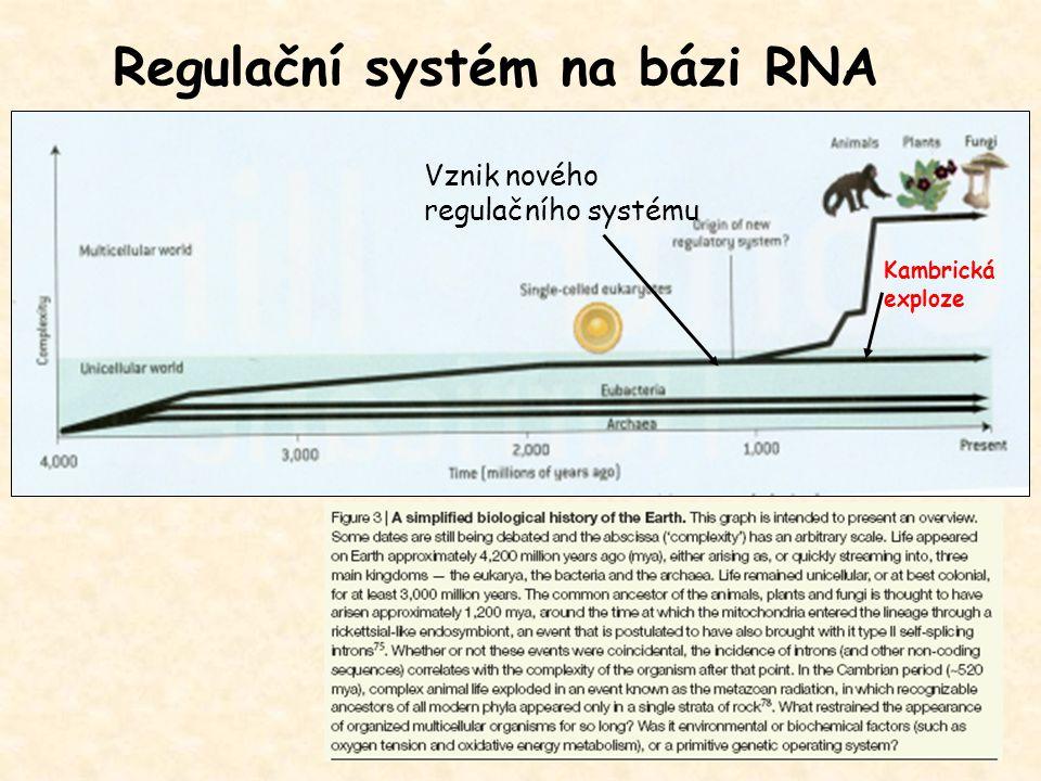 Regulační systém na bázi RNA Vznik nového regulačního systému Kambrická exploze