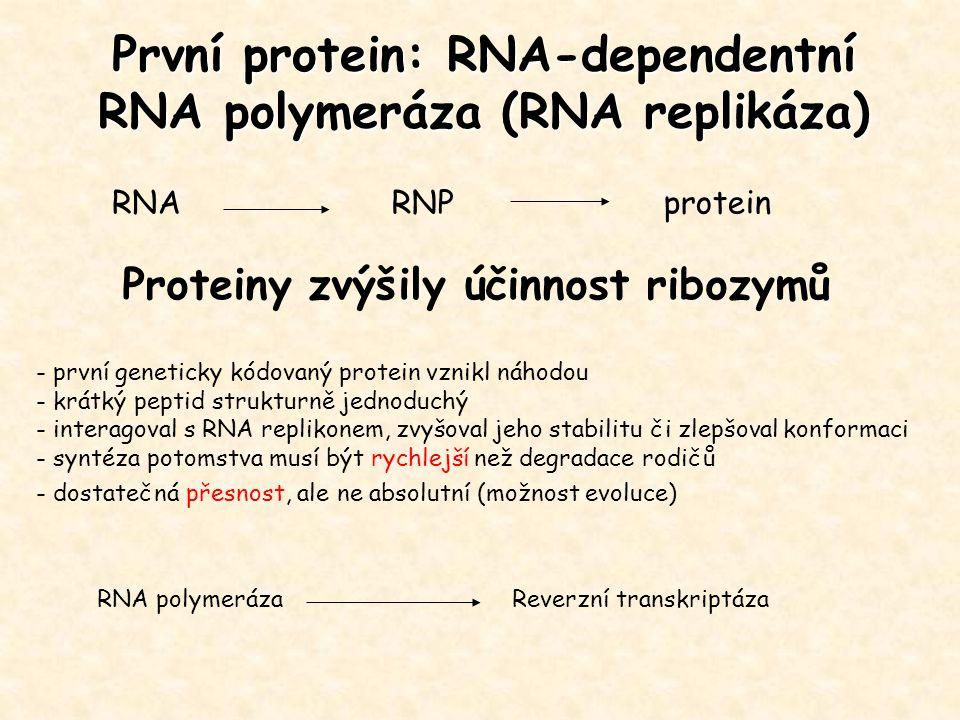 První protein: RNA-dependentní RNA polymeráza (RNA replikáza) - první geneticky kódovaný protein vznikl náhodou - krátký peptid strukturně jednoduchý