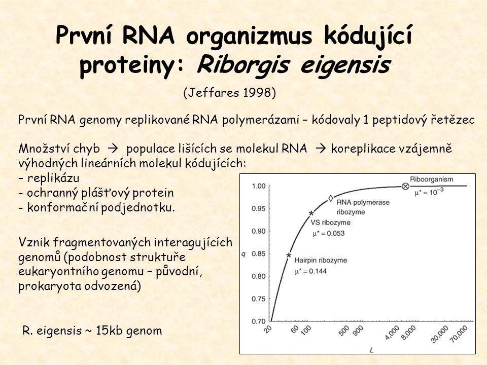 První RNA organizmus kódující proteiny: Riborgis eigensis (Jeffares 1998) První RNA genomy replikované RNA polymerázami – kódovaly 1 peptidový řetězec