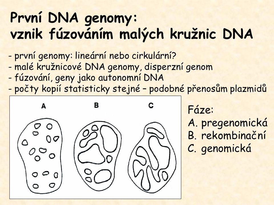První DNA genomy: vznik fúzováním malých kružnic DNA - první genomy: lineární nebo cirkulární? - malé kružnicové DNA genomy, disperzní genom - fúzován