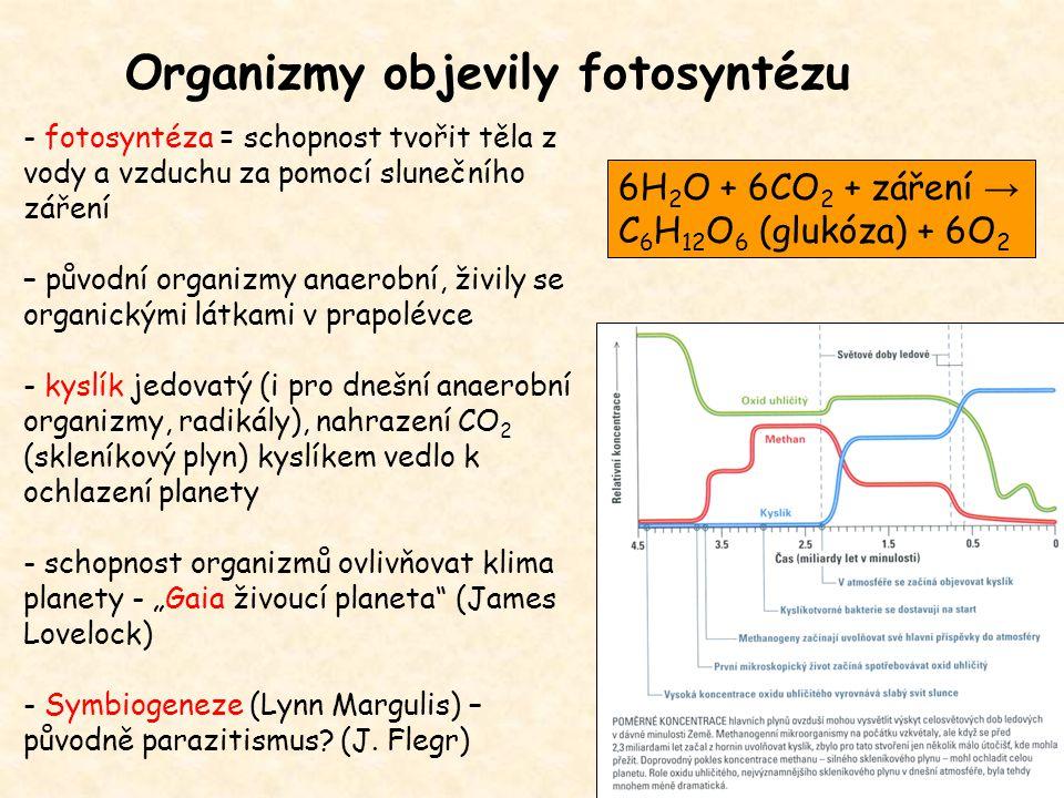 Organizmy objevily fotosyntézu - fotosyntéza = schopnost tvořit těla z vody a vzduchu za pomocí slunečního záření – původní organizmy anaerobní, živil