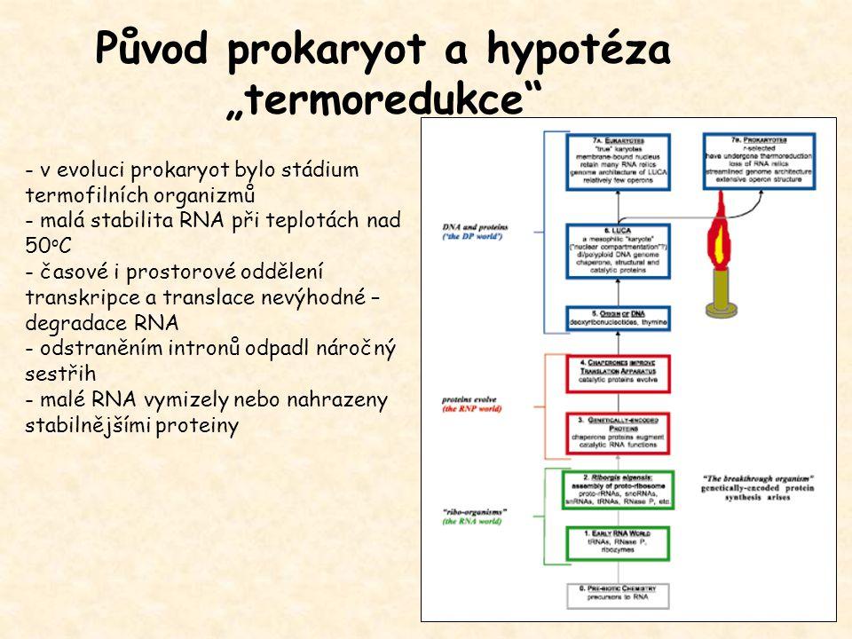 "Původ prokaryot a hypotéza ""termoredukce"" - v evoluci prokaryot bylo stádium termofilních organizmů - malá stabilita RNA při teplotách nad 50 o C - ča"