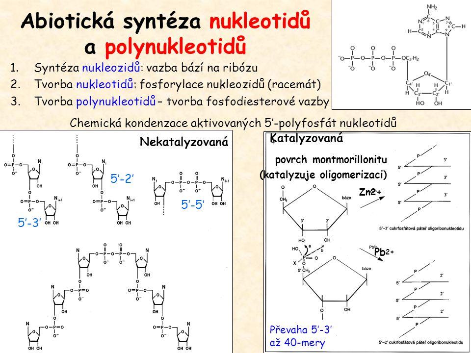 Abiotická syntéza nukleotidů a polynukleotidů povrch montmorillonitu (katalyzuje oligomerizaci) Pb 2+ Chemická kondenzace aktivovaných 5'-polyfosfát n