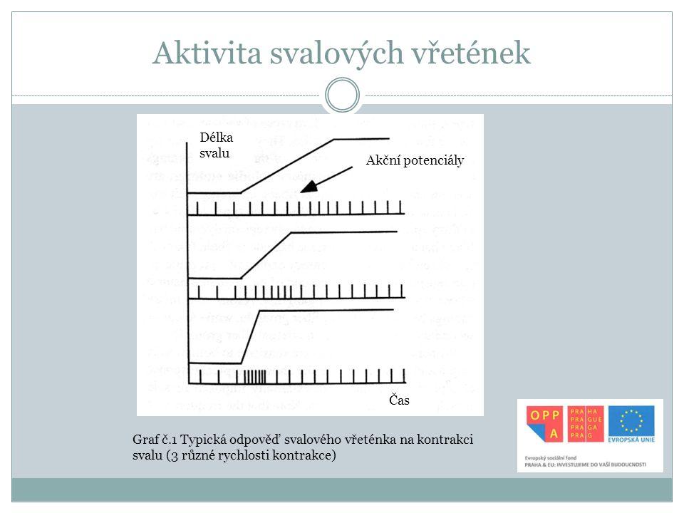 Aktivita svalových vřetének Graf č.1 Typická odpověď svalového vřeténka na kontrakci svalu (3 různé rychlosti kontrakce) Délka svalu Čas Akční potenci
