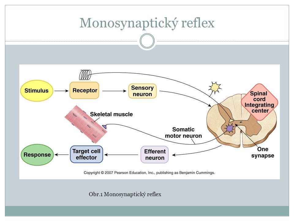 Shrnutí Svalový tonus je řízen reflexně Určitá míra napětí svalu je nutná při začátku pohybu Volní pohyb mění svalový tonus: kontrakce a relaxace svalu Poruchy svalového tonu jsou spojeny s poruchami hybnosti Na poruchách se mohou podílet všechny struktury receptorové i efektorové: Receptory Nervy senzitivní a motorické Centra ve spinální míše a CNS Nervosvalové spojení Svalová tkáň