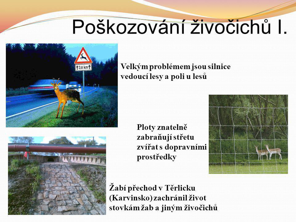 Poškozování živočichů I. Velkým problémem jsou silnice vedoucí lesy a poli u lesů Ploty znatelně zabraňují střetu zvířat s dopravními prostředky Žabí