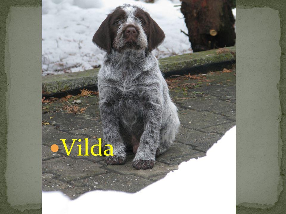 Seznamte se: Vilda
