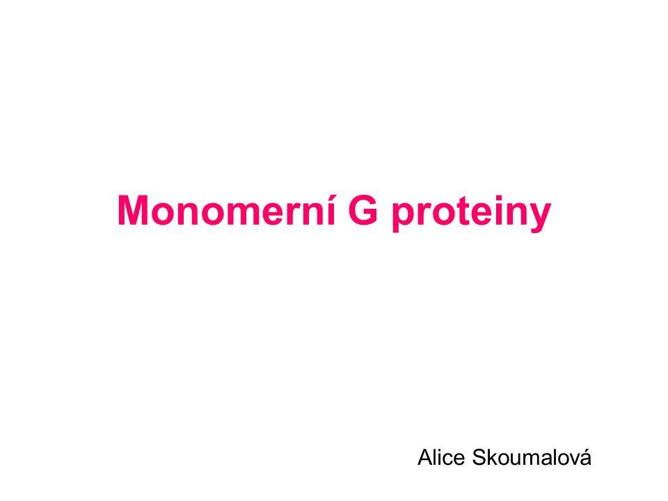 Monomerní G proteiny Alice Skoumalová