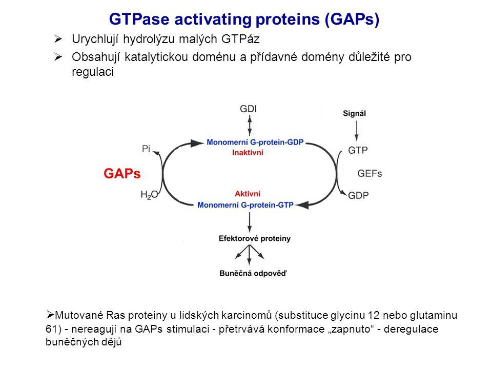 """GTPase activating proteins (GAPs)  Urychlují hydrolýzu malých GTPáz  Obsahují katalytickou doménu a přídavné domény důležité pro regulaci  Mutované Ras proteiny u lidských karcinomů (substituce glycinu 12 nebo glutaminu 61) - nereagují na GAPs stimulaci - přetrvává konformace """"zapnuto - deregulace buněčných dějů"""