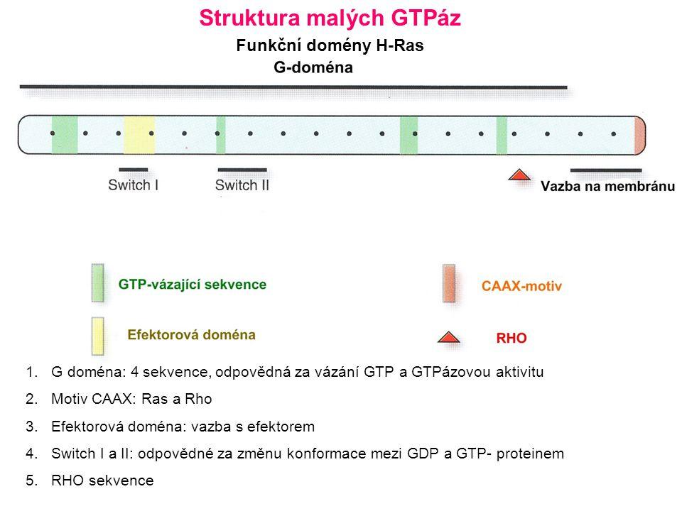 1.G doména: 4 sekvence, odpovědná za vázání GTP a GTPázovou aktivitu 2.Motiv CAAX: Ras a Rho 3.Efektorová doména: vazba s efektorem 4.Switch I a II: odpovědné za změnu konformace mezi GDP a GTP- proteinem 5.RHO sekvence Struktura malých GTPáz Funkční domény H-Ras