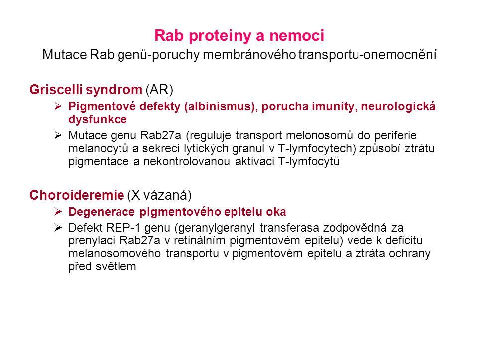 Rab proteiny a nemoci Mutace Rab genů-poruchy membránového transportu-onemocnění Griscelli syndrom (AR)  Pigmentové defekty (albinismus), porucha imunity, neurologická dysfunkce  Mutace genu Rab27a (reguluje transport melonosomů do periferie melanocytů a sekreci lytických granul v T-lymfocytech) způsobí ztrátu pigmentace a nekontrolovanou aktivaci T-lymfocytů Choroideremie (X vázaná)  Degenerace pigmentového epitelu oka  Defekt REP-1 genu (geranylgeranyl transferasa zodpovědná za prenylaci Rab27a v retinálním pigmentovém epitelu) vede k deficitu melanosomového transportu v pigmentovém epitelu a ztráta ochrany před světlem