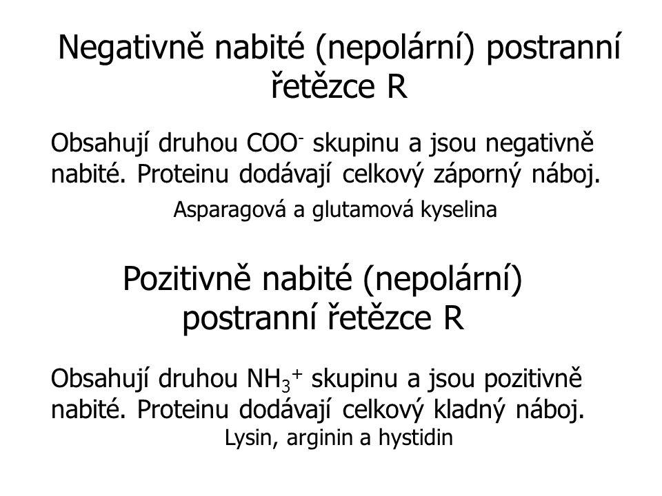 Negativně nabité (nepolární) postranní řetězce R Obsahují druhou COO - skupinu a jsou negativně nabité.