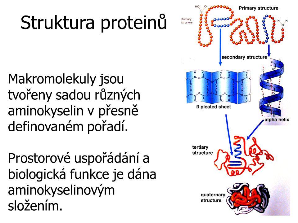 Makromolekuly jsou tvořeny sadou různých aminokyselin v přesně definovaném pořadí.