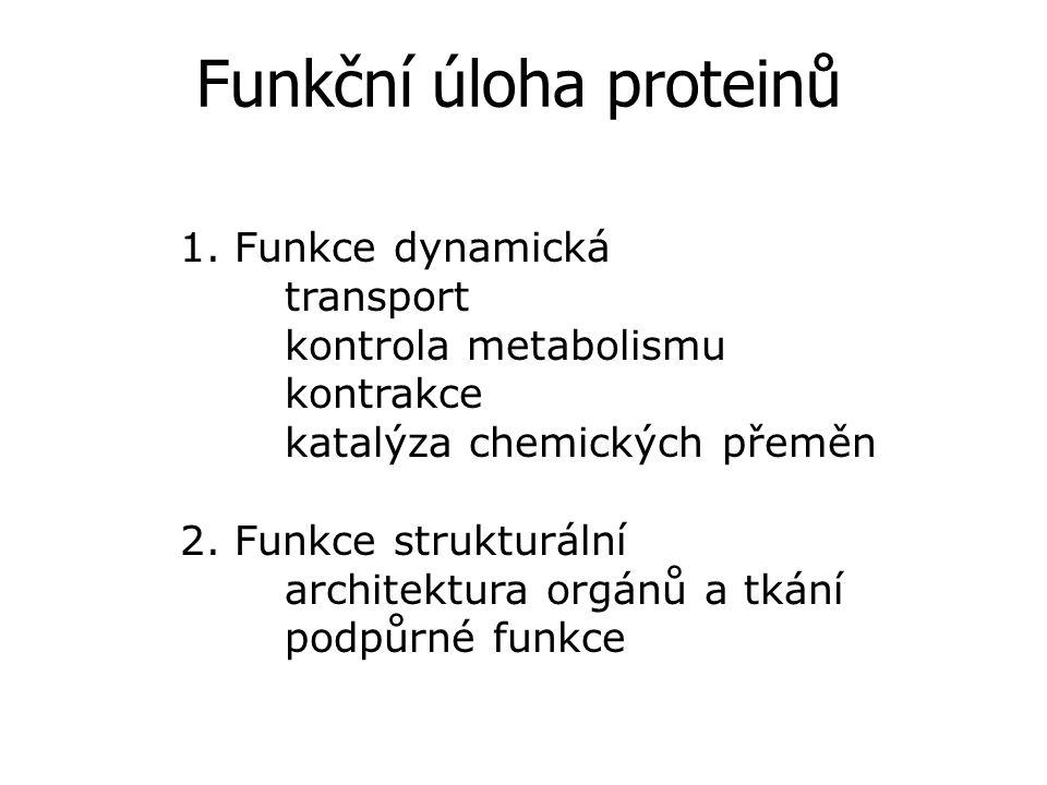 Funkční úloha proteinů 1.