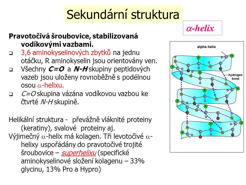 Sekundární struktura Pravotočivá šroubovice, stabilizovaná vodíkovými vazbami.