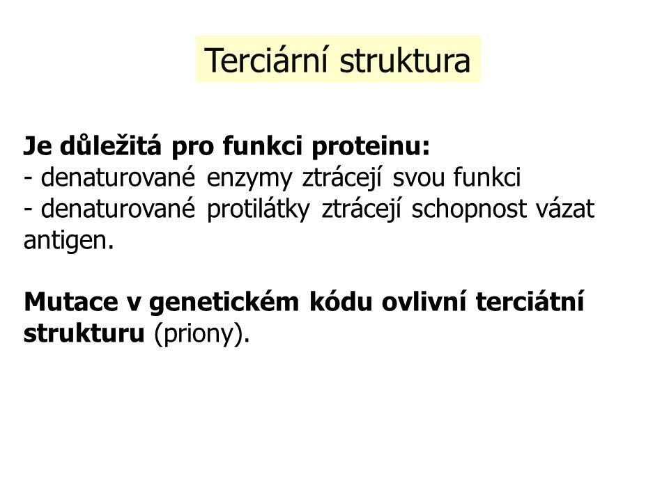 Terciární struktura Je důležitá pro funkci proteinu: - denaturované enzymy ztrácejí svou funkci - denaturované protilátky ztrácejí schopnost vázat antigen.