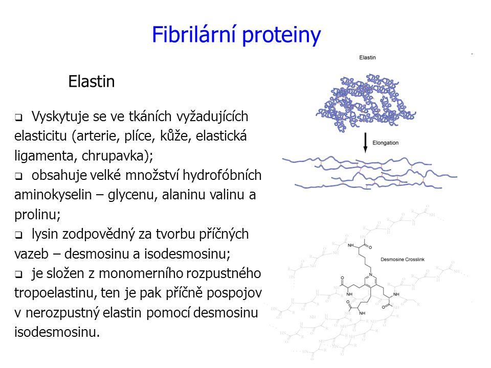 Elastin  Vyskytuje se ve tkáních vyžadujících elasticitu (arterie, plíce, kůže, elastická ligamenta, chrupavka);  obsahuje velké množství hydrofóbních aminokyselin – glycenu, alaninu valinu a prolinu;  lysin zodpovědný za tvorbu příčných vazeb – desmosinu a isodesmosinu;  je složen z monomerního rozpustného tropoelastinu, ten je pak příčně pospojován v nerozpustný elastin pomocí desmosinu a isodesmosinu.