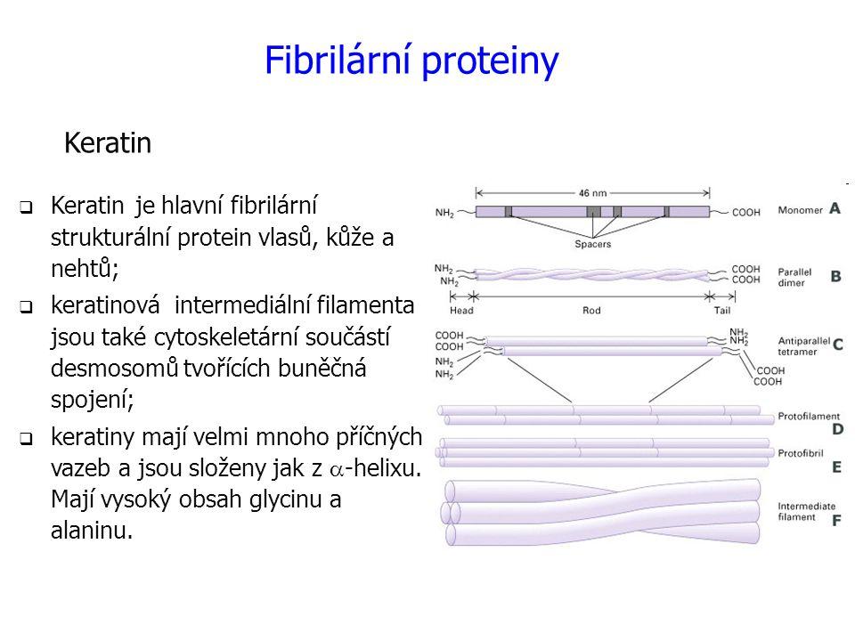Keratin  Keratin je hlavní fibrilární strukturální protein vlasů, kůže a nehtů;  keratinová intermediální filamenta jsou také cytoskeletární součástí desmosomů tvořících buněčná spojení;  keratiny mají velmi mnoho příčných vazeb a jsou složeny jak z  -helixu.