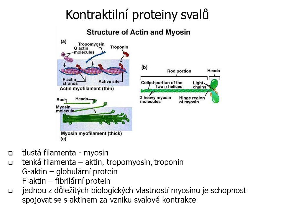 Kontraktilní proteiny svalů  tlustá filamenta - myosin  tenká filamenta – aktin, tropomyosin, troponin G-aktin – globulární protein F-aktin – fibrilární protein  jednou z důležitých biologických vlastností myosinu je schopnost spojovat se s aktinem za vzniku svalové kontrakce