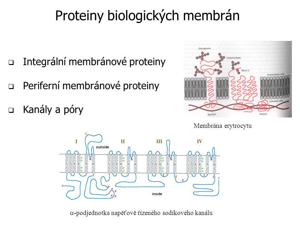  Integrální membránové proteiny  Periferní membránové proteiny  Kanály a póry Membrána erytrocytu  -podjednotka napěťově řízeného sodíkového kanálu