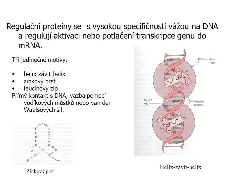 Proteiny regulace transkripce DNA Regulační proteiny se s vysokou specifičností vážou na DNA a regulují aktivaci nebo potlačení transkripce genu do mRNA.