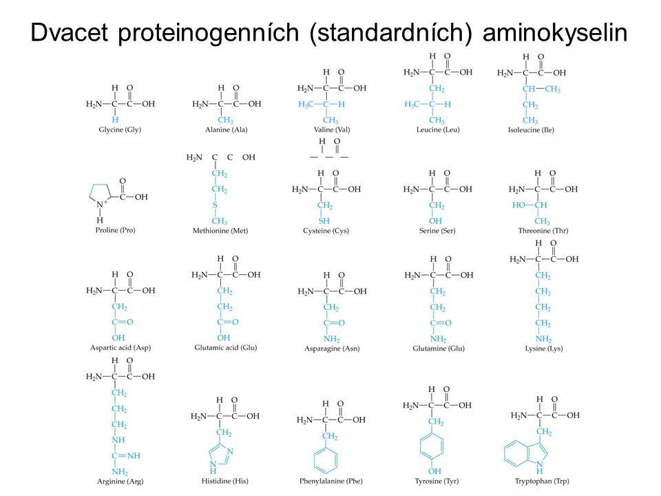 Z primární struktury proteinů lze odvodit:  strukturu proteinu  mechanismus působení na molekulární úrovni  vzájemné vztahy k jiným proteinům v evoluci Sekvenování proteinů má význam pro:  předpokládanou podobnost mezi dvěma proteiny  studium modifikací proteinu