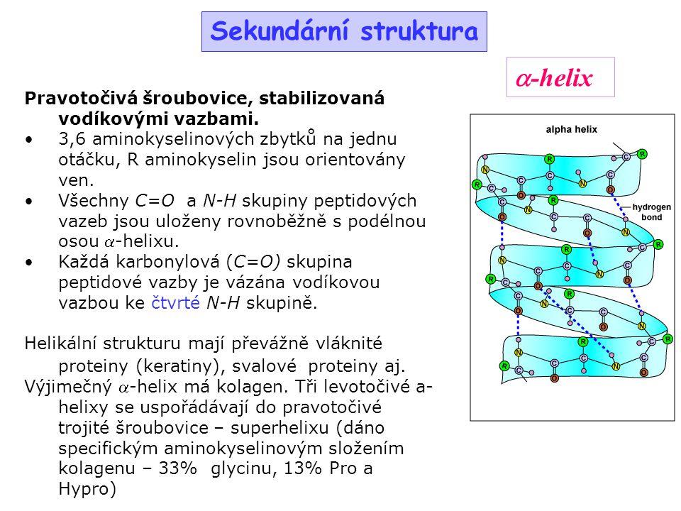 Sekundární struktura Pravotočivá šroubovice, stabilizovaná vodíkovými vazbami. 3,6 aminokyselinových zbytků na jednu otáčku, R aminokyselin jsou orien