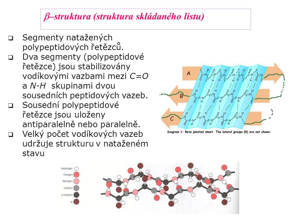  Segmenty natažených polypeptidových řetězců.  Dva segmenty (polypeptidové řetězce) jsou stabilizovány vodíkovými vazbami mezi C=O a N-H skupinami d