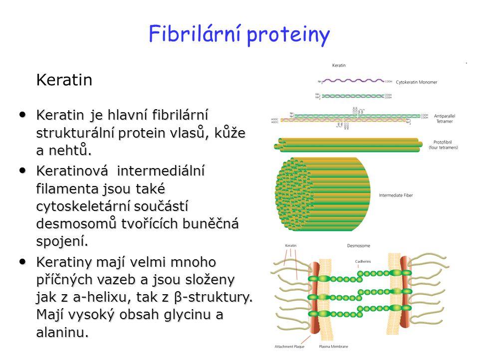 Fibrilární proteiny Keratin Keratin je hlavní fibrilární strukturální protein vlasů, kůže a nehtů. Keratin je hlavní fibrilární strukturální protein v