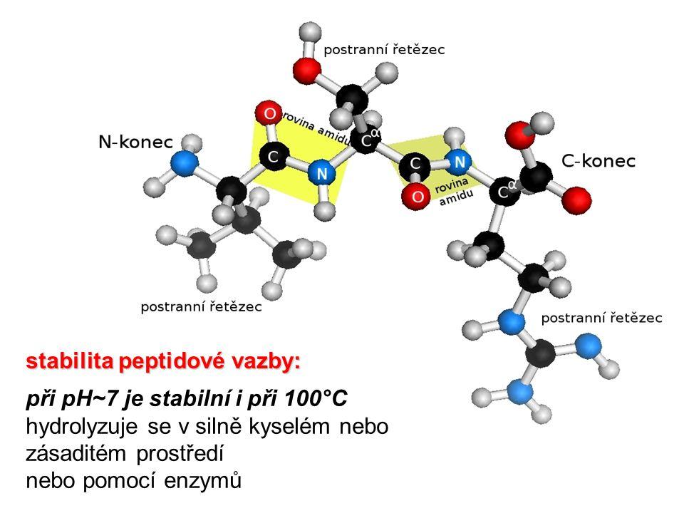při pH~7 je stabilní i při 100°C hydrolyzuje se v silně kyselém nebo zásaditém prostředí nebo pomocí enzymů stabilita peptidové vazby: