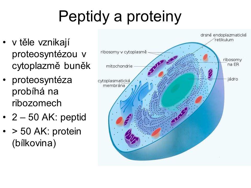 Peptidy a proteiny v těle vznikají proteosyntézou v cytoplazmě buněk proteosyntéza probíhá na ribozomech 2 – 50 AK: peptid > 50 AK: protein (bílkovina