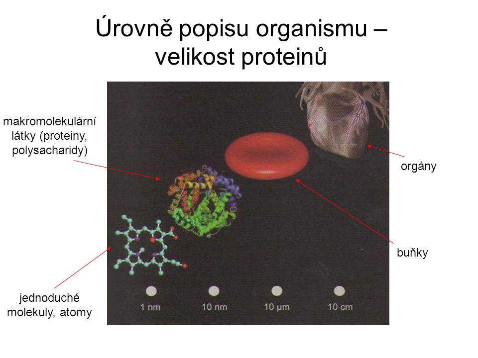 Úrovně popisu organismu – velikost proteinů jednoduché molekuly, atomy makromolekulární látky (proteiny, polysacharidy) buňky orgány