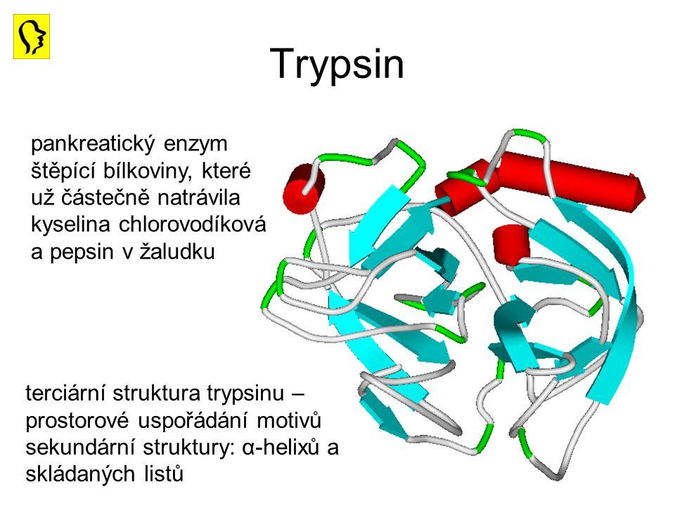Trypsin pankreatický enzym štěpící bílkoviny, které už částečně natrávila kyselina chlorovodíková a pepsin v žaludku terciární struktura trypsinu – pr