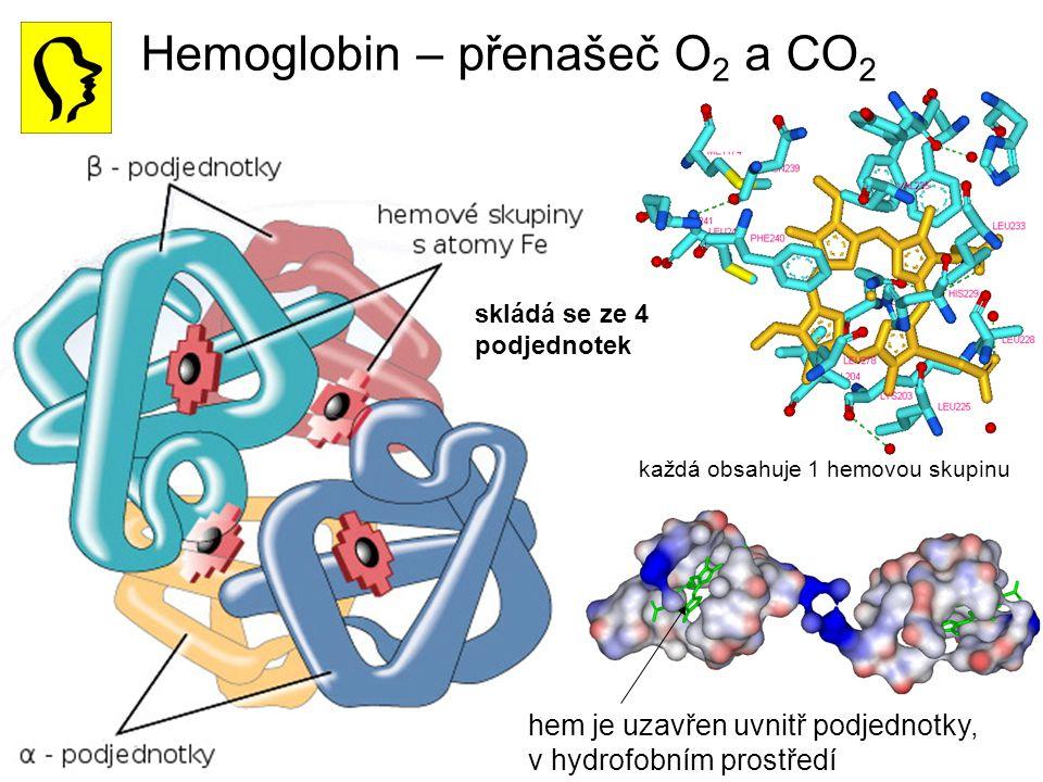 Hemoglobin – přenašeč O 2 a CO 2 hem je uzavřen uvnitř podjednotky, v hydrofobním prostředí skládá se ze 4 podjednotek každá obsahuje 1 hemovou skupin