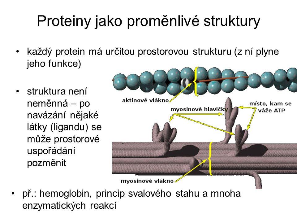 Proteiny jako proměnlivé struktury každý protein má určitou prostorovou strukturu (z ní plyne jeho funkce) př.: hemoglobin, princip svalového stahu a