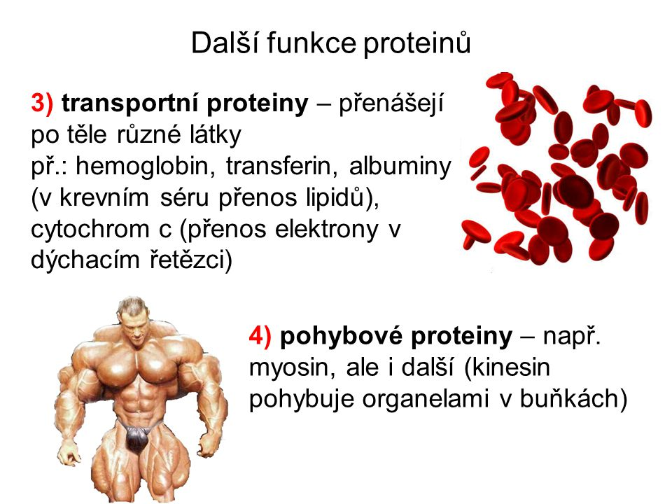 Další funkce proteinů 3) transportní proteiny – přenášejí po těle různé látky př.: hemoglobin, transferin, albuminy (v krevním séru přenos lipidů), cy